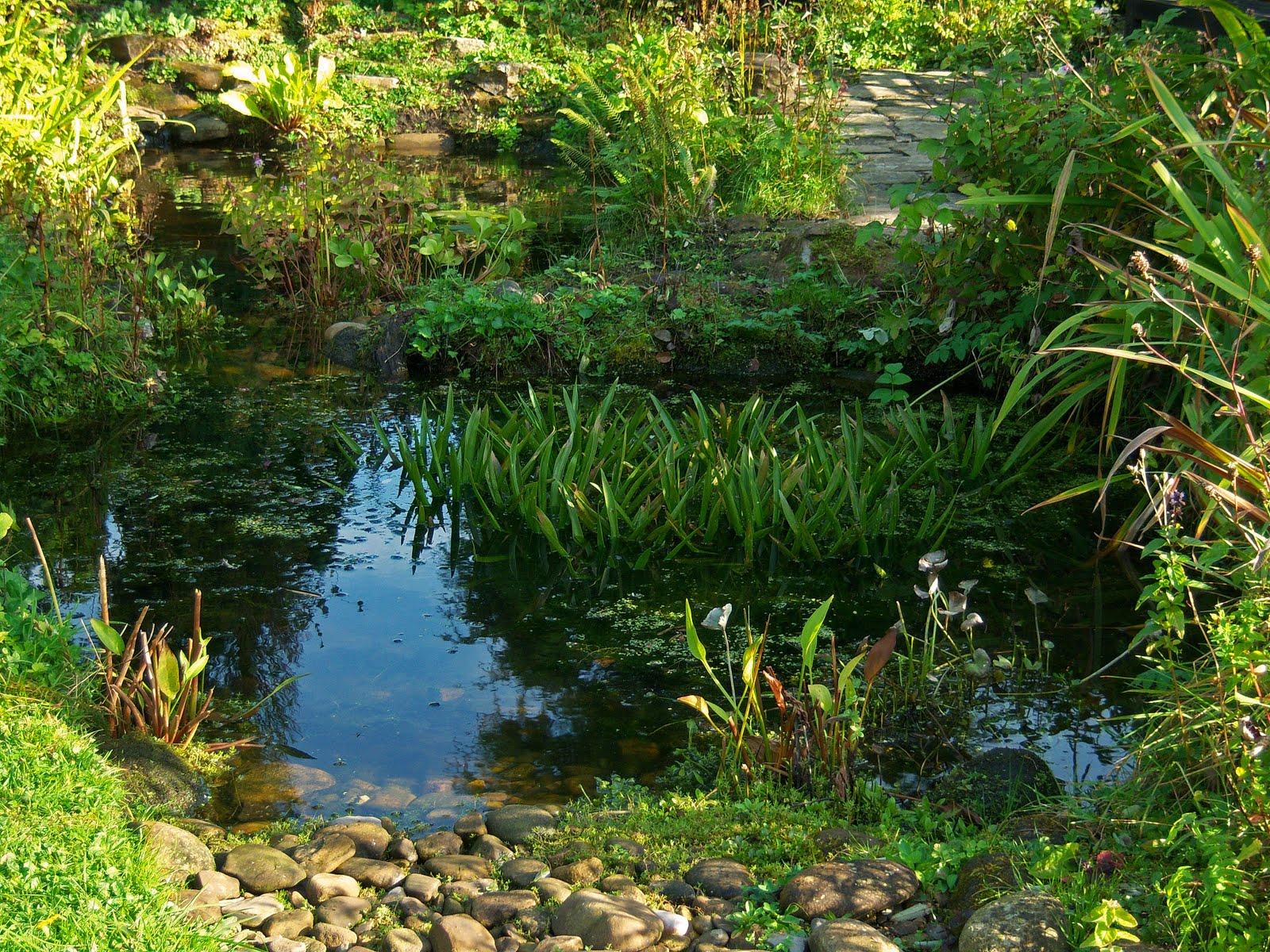 Minnows In Pond