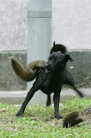dog squirrel