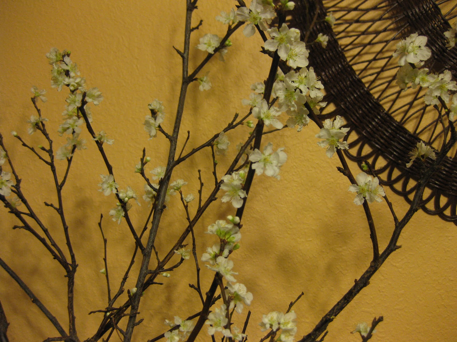 Growing A Garden In Davis: One Last Gift From the Plum Tree