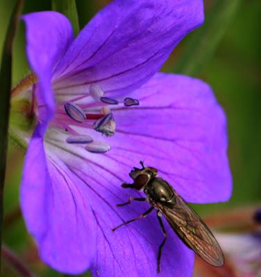 Velkommen til bords min venn, honning og nektar er servert!
