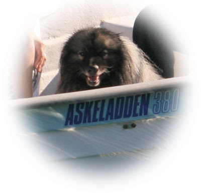 Skipshund