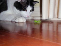 Basil and his grasshopper