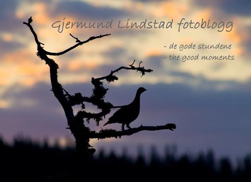 Gjermund Lindstad fotoblogg