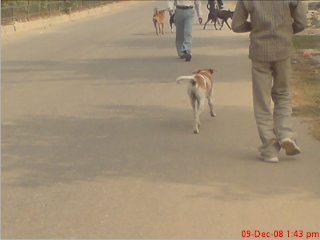 Dogs on Road