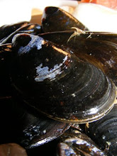 PEI MUSSELS