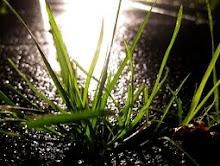 Gras wächst überall