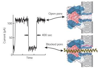 SimpleRNA: Nanopore Sequencing, Genome Sequencing In 24 hours