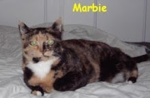 "My Cat, Marbie, AKA ""The MarbieCat"" or ""Sweet Baby Cakes"""