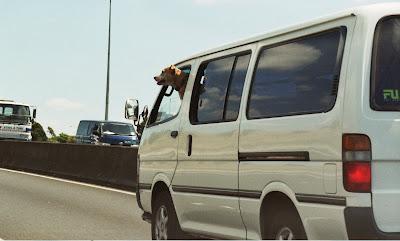 It's a CAR PET!  Ho-HO!