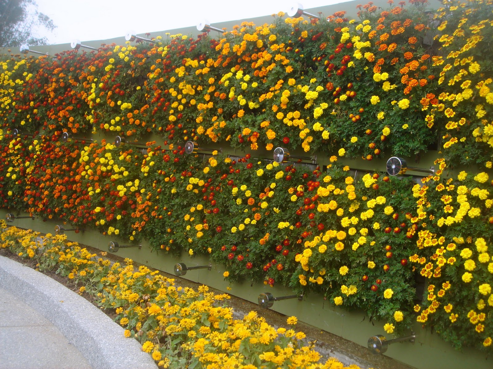 Souvenir Of Last Beautiful Day For >> Taipei Daily Photo: Flower Wall @ Flora Expo