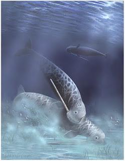 odobenocetops leptodon