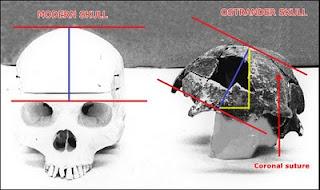 Ostrander Skull
