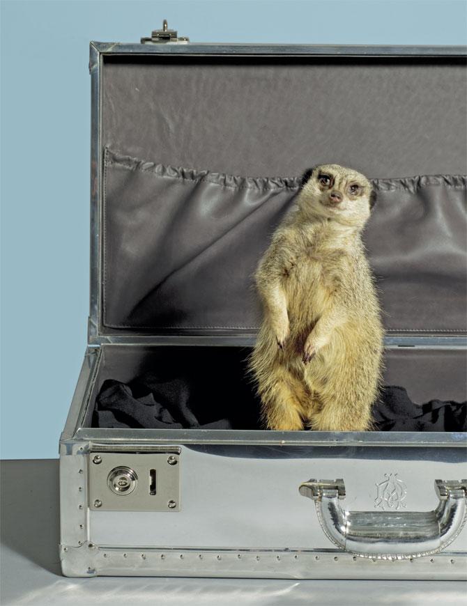 http://2.bp.blogspot.com/__wgTdCCrfeY/S8aPbGMBIEI/AAAAAAAAGA4/ZAPvYCNCq6U/s1600/animal-in-briefcase.jpg