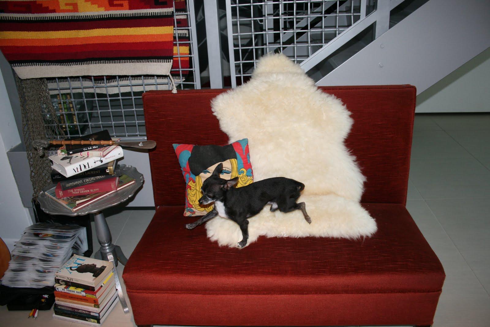 http://2.bp.blogspot.com/__wgTdCCrfeY/TBv61HgkCMI/AAAAAAAAGNw/n0g7y6N9zIE/s1600/Hendler+House+%26+Mouse+073.jpg