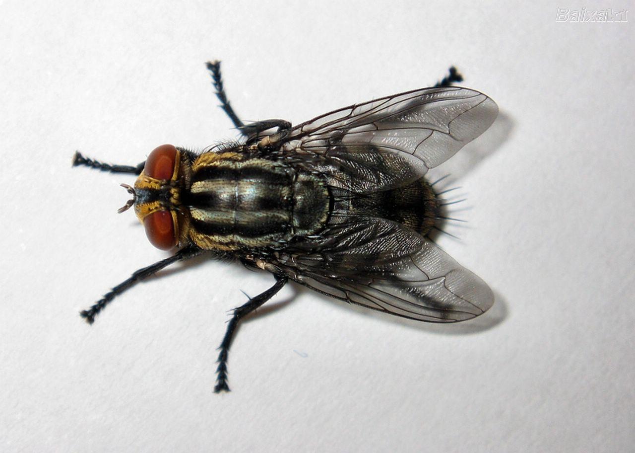 Encantada blog de las moscas del mercado - Moscas pequenas en el techo ...