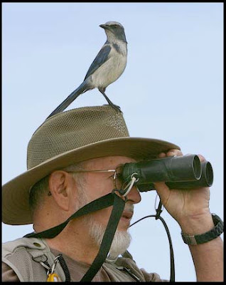 Does anyone know a real life unlucky Alf Florida_Bird_Watchers