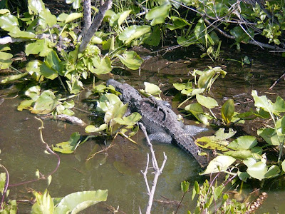 Living Alongside Wildlife: Mommy Dearest