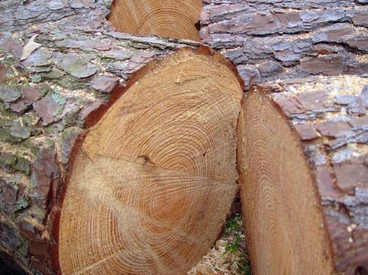 Timber Distributors Llc Green Heart Timber