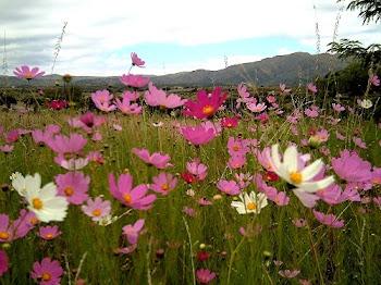 Y si la hierba del campo que hoy es, y mañana se echa en el horno, Dios la viste así ...