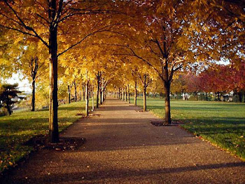 Te haré entender; y te enseñaré el camino en que debes andar; sobre ti fijaré mis ojos.