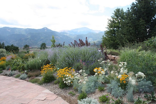 reduce summertime watering xeriscape
