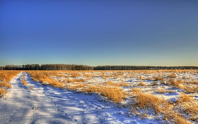 Frosty winter evening.(Зимний морозный вечер)