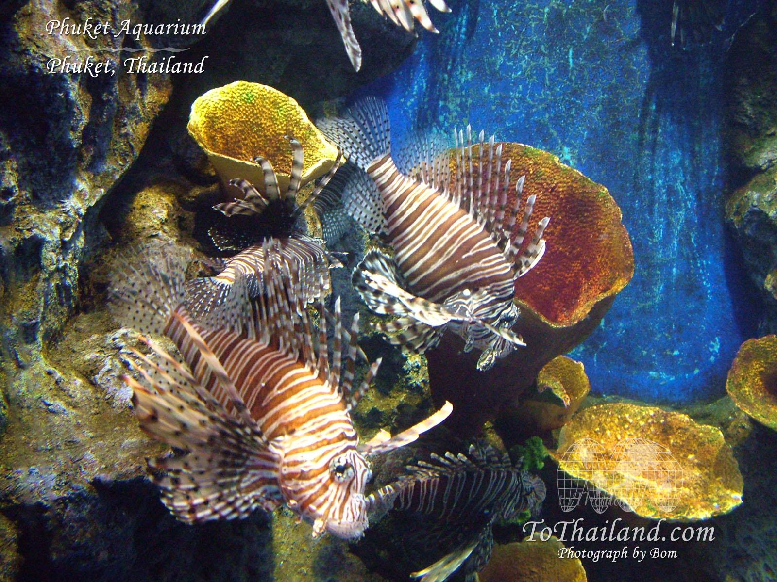 http://2.bp.blogspot.com/_a1oM4gV1bv4/SN25TVHN0OI/AAAAAAAAALc/RdyzKUuXLuM/s1600/phuket_aquarium_marine.jpg