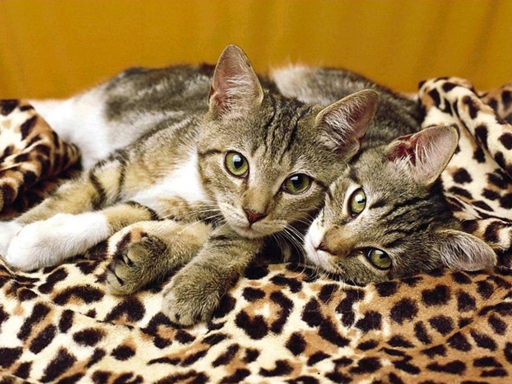 kitties4b - Animal wallpaperz