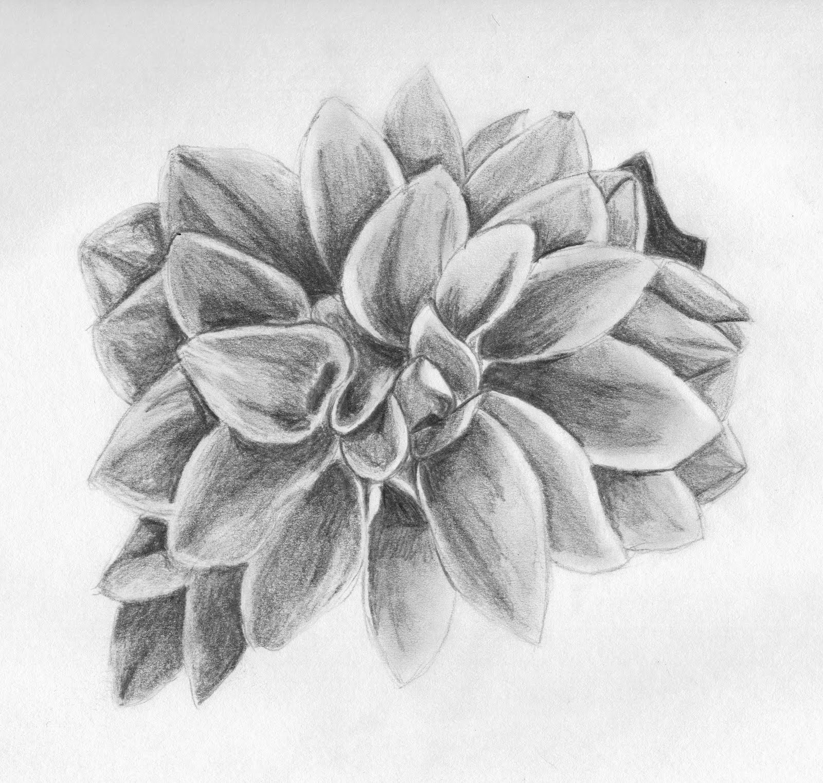 ROBYN POLAN Sketches