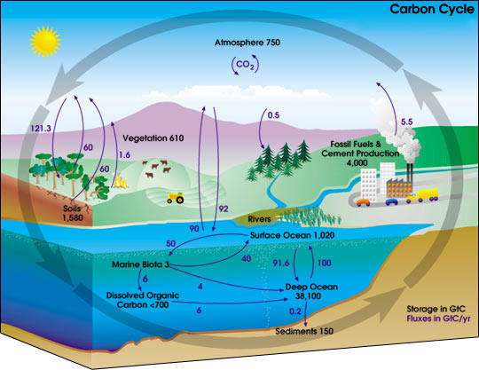 the biogeochemical cycles of earth A biogeochemical cycle is a pathway by which a chemical element, such as carbon, or compound, like water, moves through earth's biosphere, atmosphere, hydrosphere and lithosphere in effect, the element is recycled, although in some cycles the element is accumulated or held for long periods of time.
