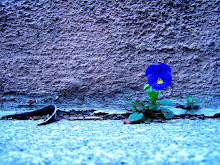 Alone and blue...