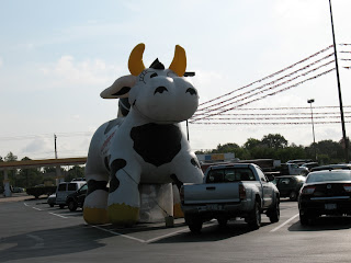 another big cow