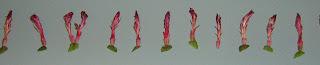 Flores secas de un cactus epfifito