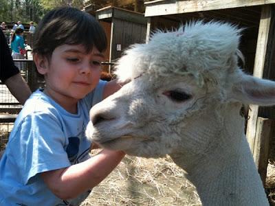 Henry and llama