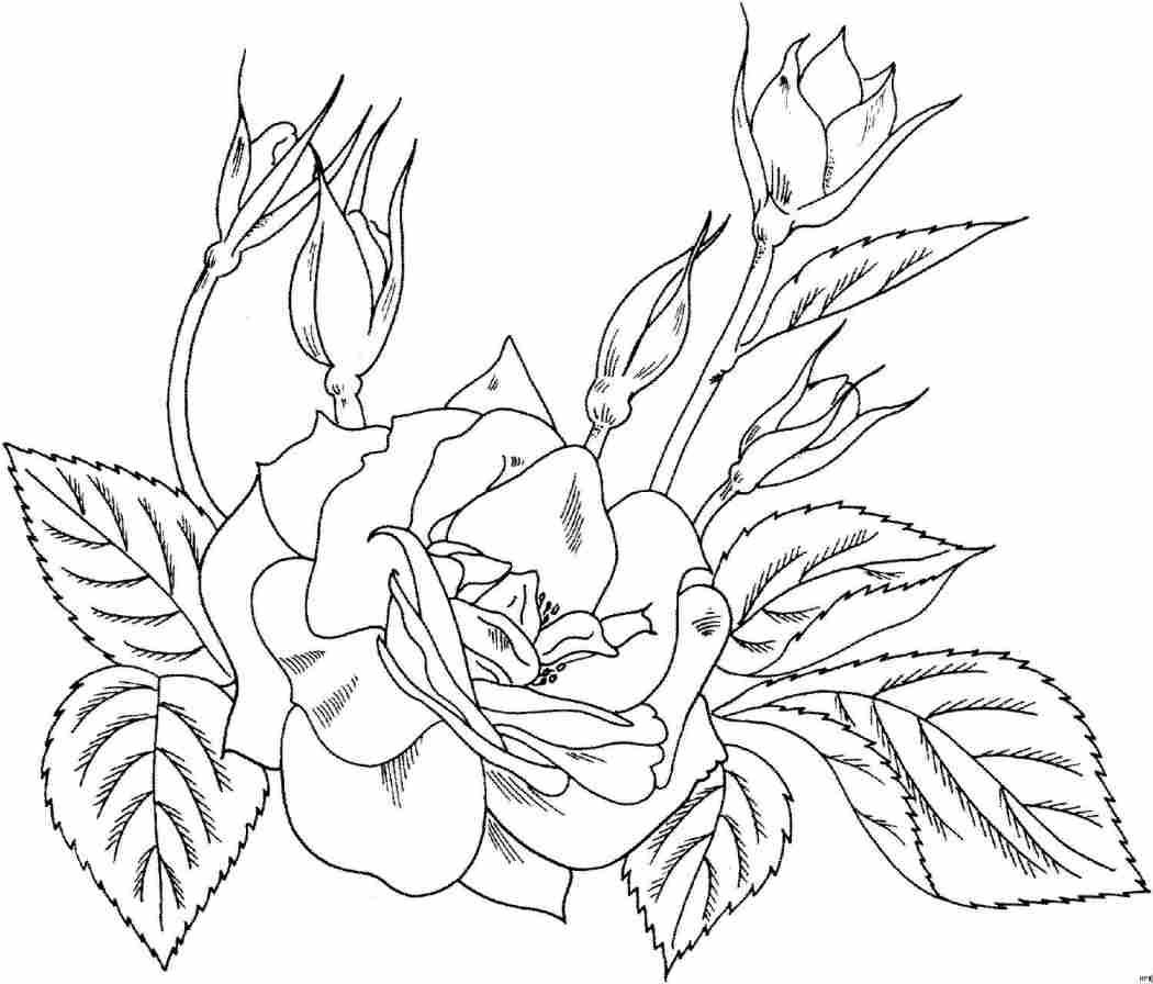 Dibujos para colorear: Flor para pintar