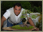 CURSOS DE BONSAI A LA CARTA