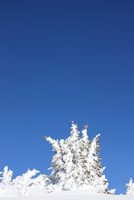 Rimed Ridgetop tree