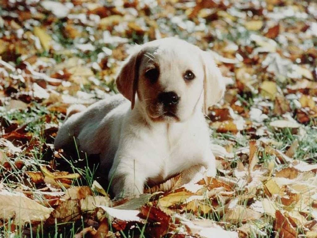 http://2.bp.blogspot.com/_aB76mx6-gHw/TOQNpHYhkQI/AAAAAAAAAfw/mF9zLNPEov8/s1600/chiens_023.jpg