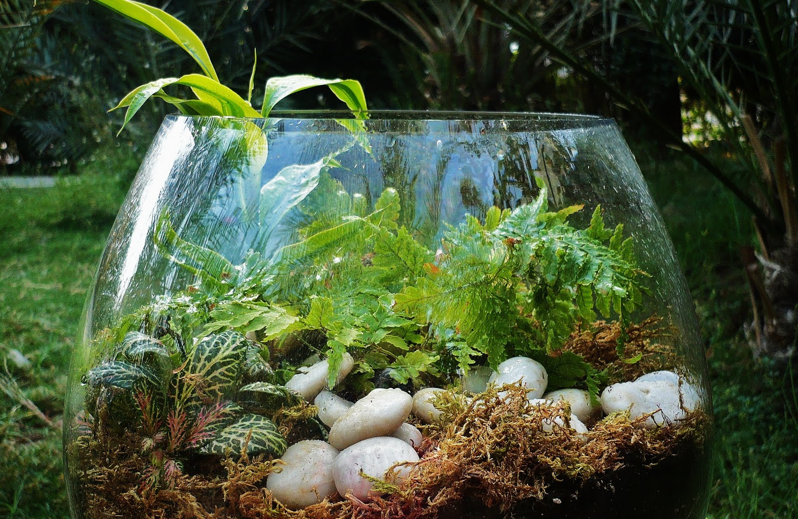 how to make a terrarium with fish