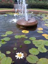 Memphis Botanical Garden