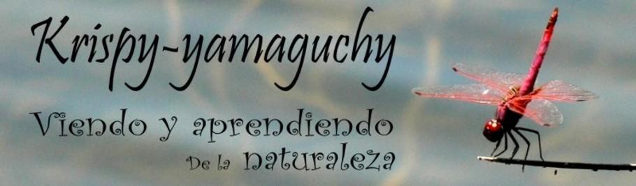 krispy_yamaguchy, viendo y aprendiendo de la naturaleza