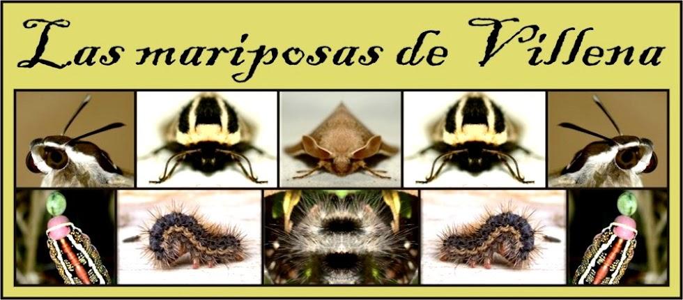 Las mariposas de Villena
