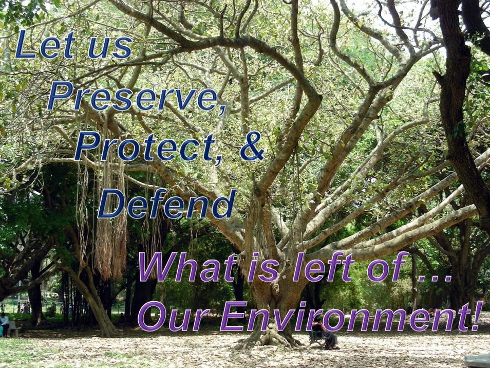 Protecting Our Environment Essay