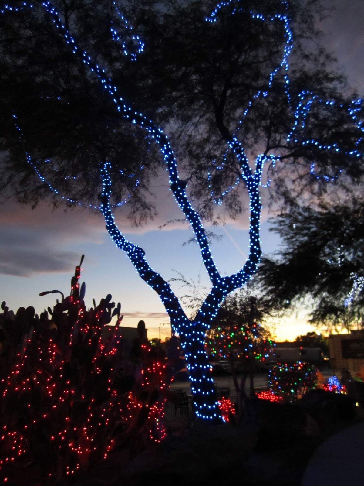 cactus garden lights christmas tradition wendys hat