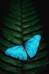 Otras Mariposas.