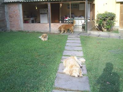 Hospedaje canino - Cercados para perros ...