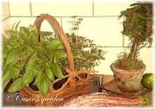 Örtagårdssmör till grillat