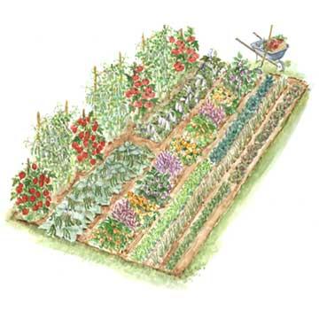 Urban Self Sufficientist Start Planning Next Years Veggie
