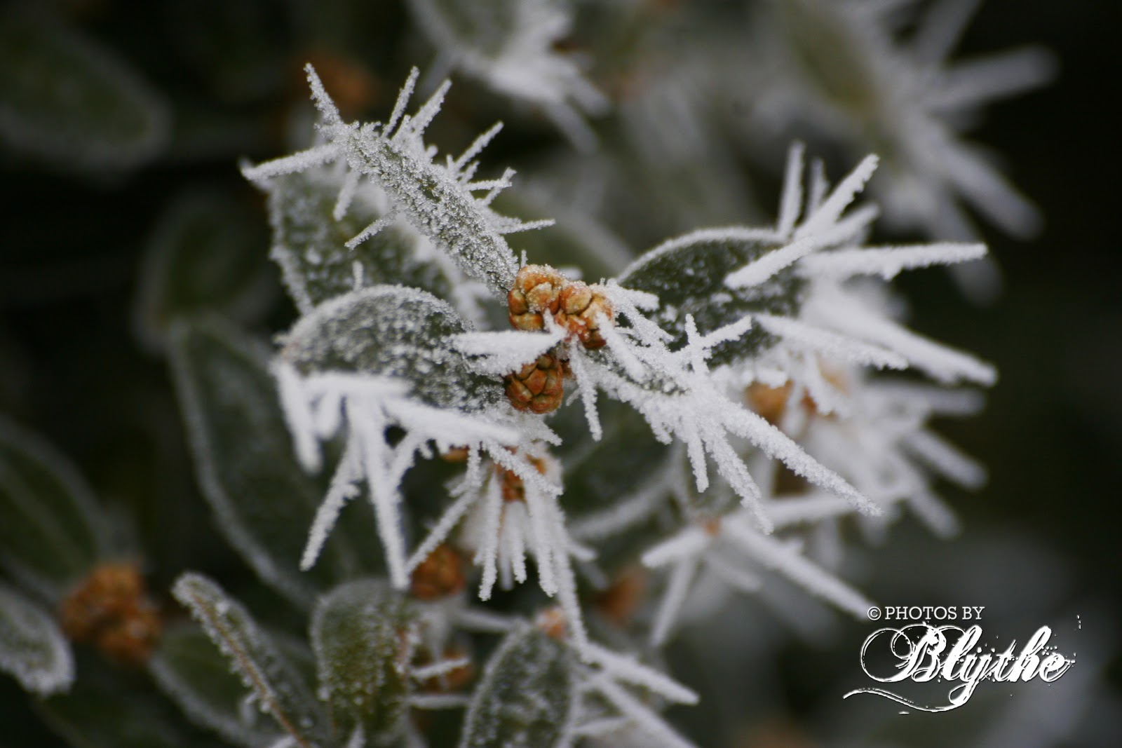 Photos By Blythe Pogonip Meaning Quot Icy Fog Quot In Shoshone