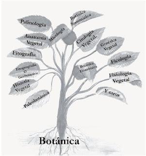 El herbario ramas de la bot nica for Botanica general pdf